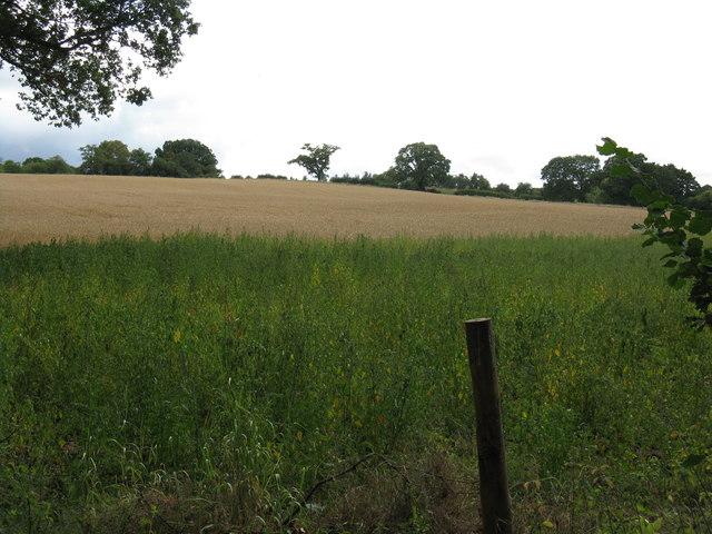 Hillside south of Gladder Brook