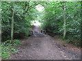 TL4400 : Footbridge in Epping Thicks by Roger Jones