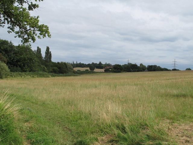 Field near Ivy Chimneys