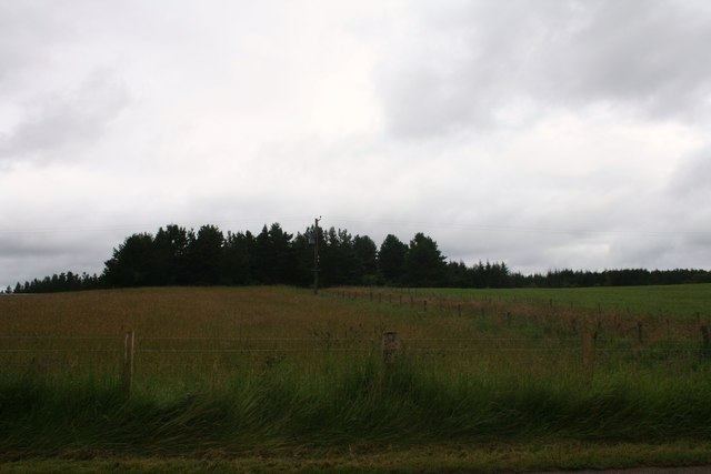 Newlands Wood