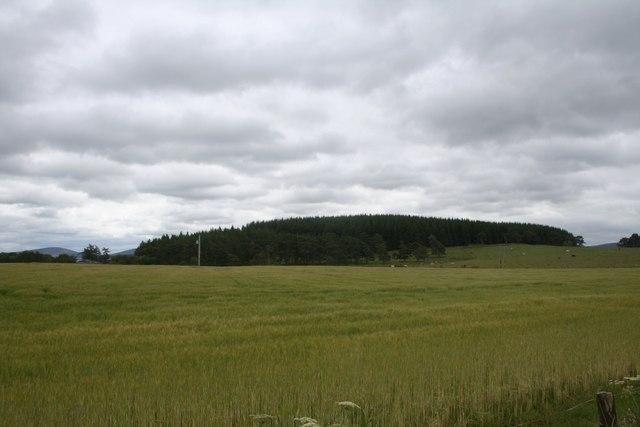 Barley by Tom Dow