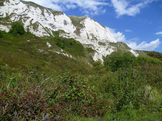 The cliffs of Folkestone Warren