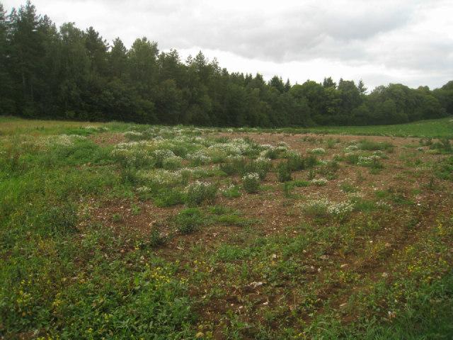 Fallow field by Wych Hazel Copse