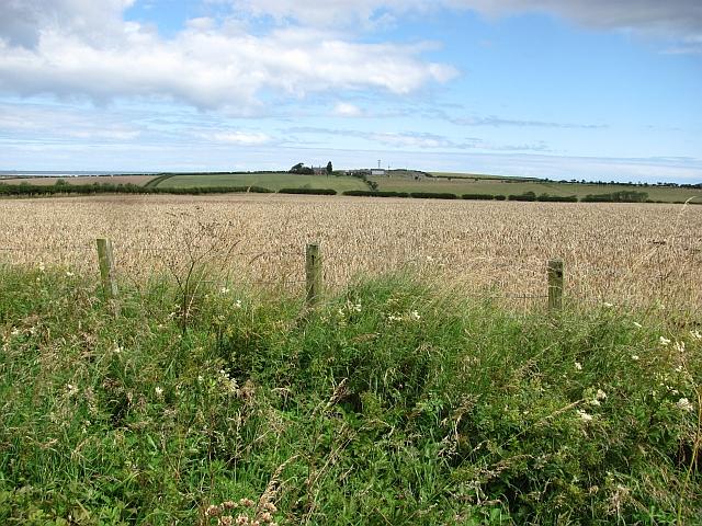 Wheat field, Fenwick