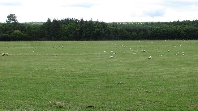 Grassland near Kyloe Woods