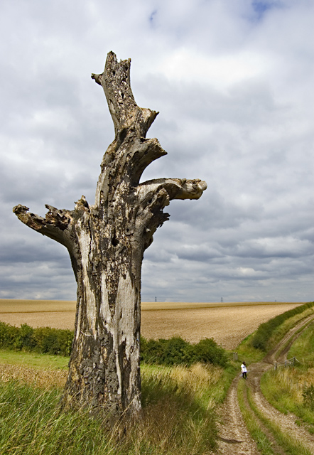 Dead tree on Turtle Hill