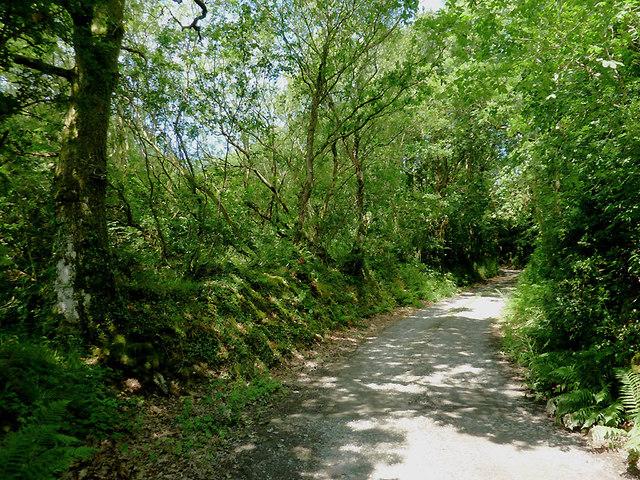 Farm road east of Comins Capel Betws, Ceredigion
