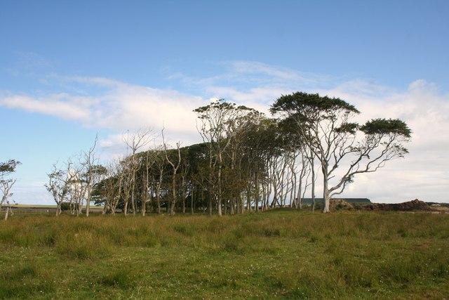 Crimond Tree Belt