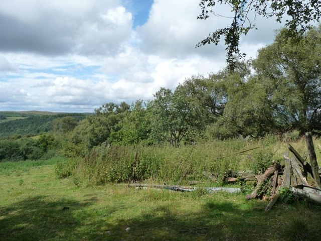 Nettles and trees