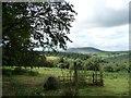SO3496 : Wooded hillside west of Rock Farm by Christine Johnstone