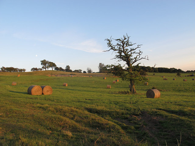 Abbey Farm - hay bales awaiting collection