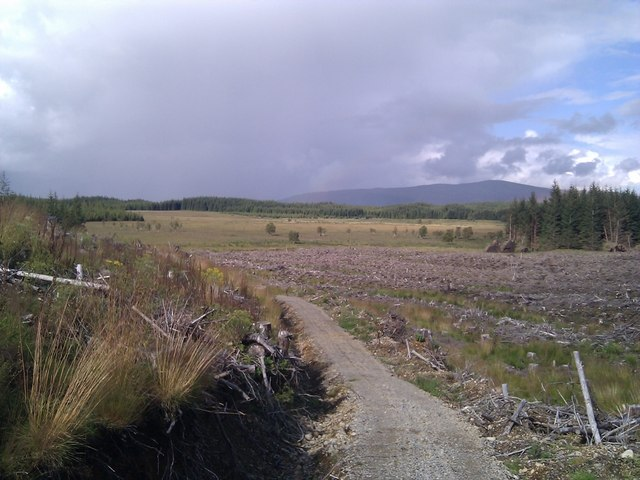 Cleared Forestry with timber extraction track