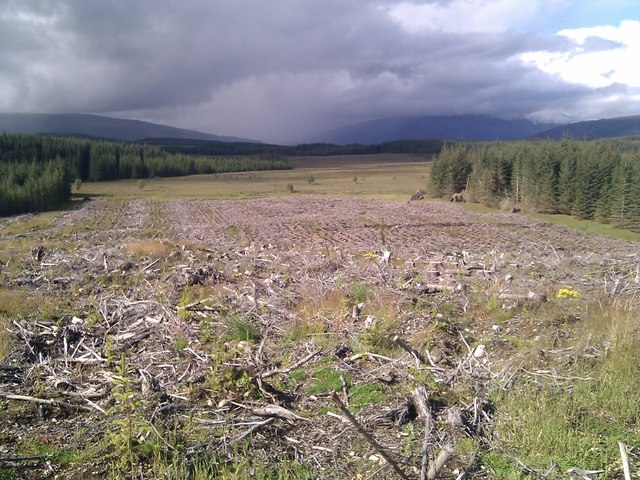 View north across cleared forestry