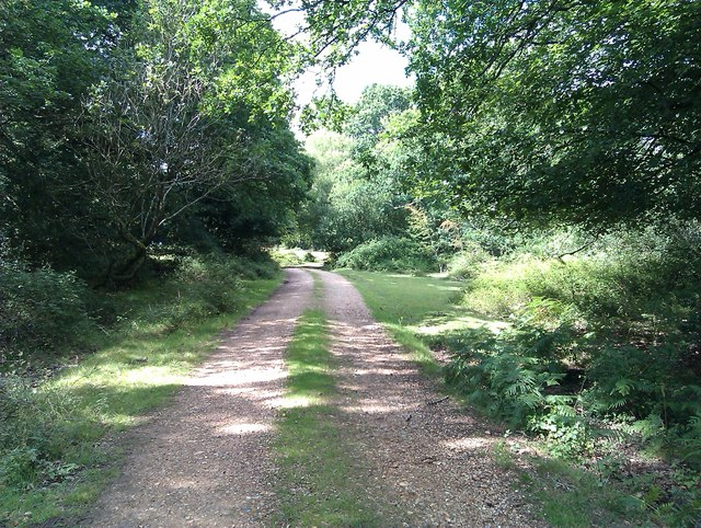 Forest track near Busketts Lawn