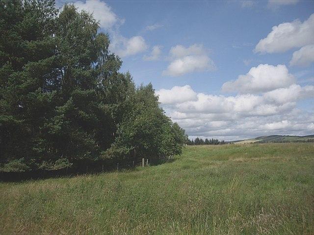 Plantation edge near Dalbreak