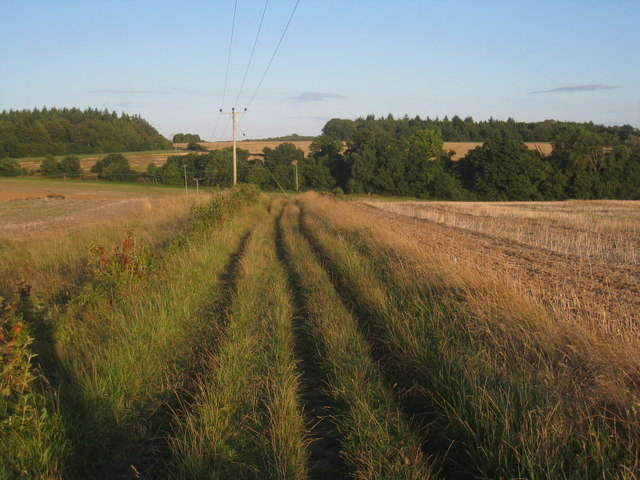The Wayfarer's Walk