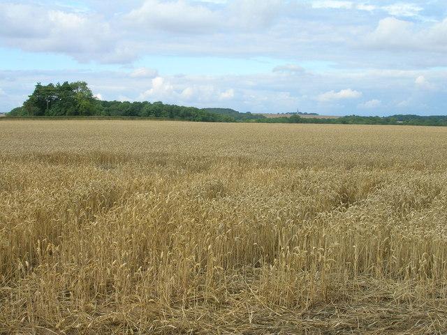 Farmland off Lamb Lane