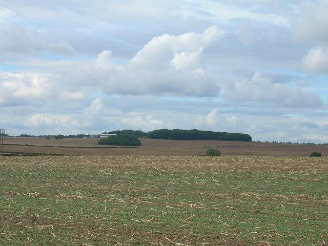 Farmland off Gildingwells Road