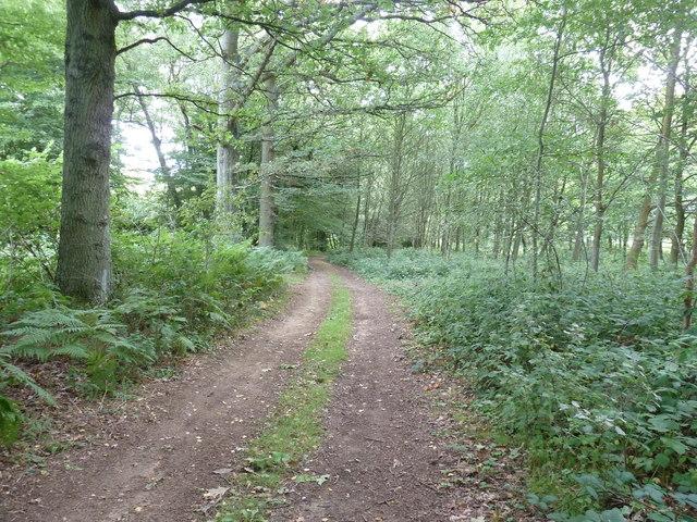 Path in Weir Wood