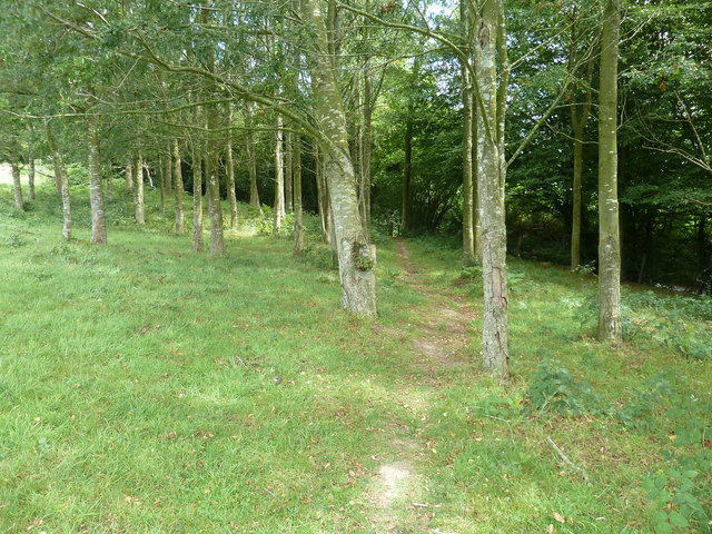 Trees at Tremaines