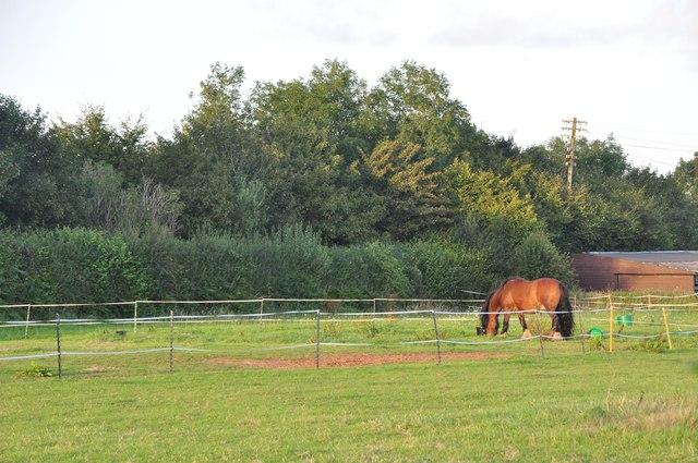 Mid Devon : Horse in a Field