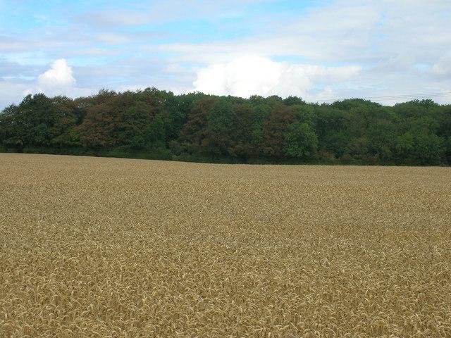 Farmland towards Little Thwaite Wood