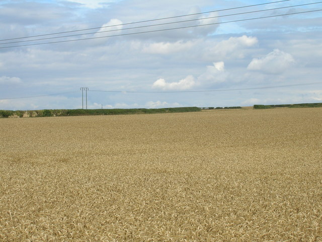 Farmland of Lamb Lane