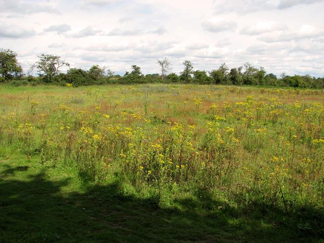 Playing field in Eyke