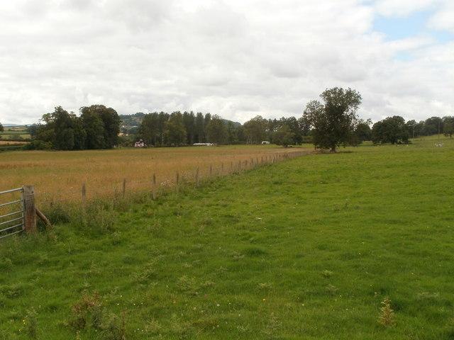 Fields adjacent to Bronllys Hospital