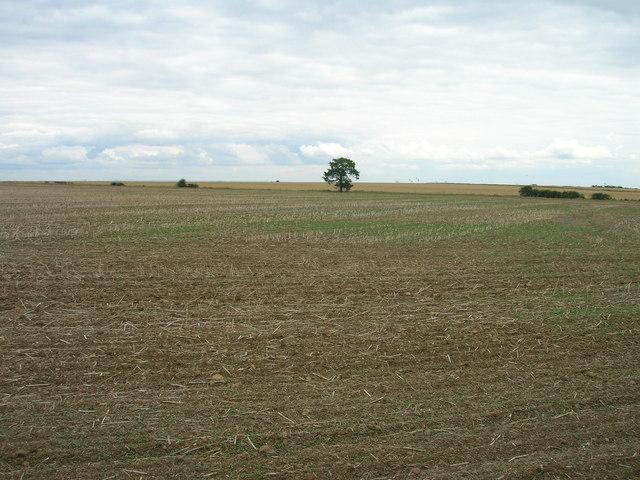 Farmland off Tickhill Back Lane