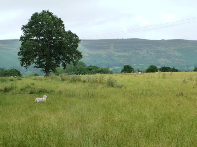 Lone tree in a sheep field