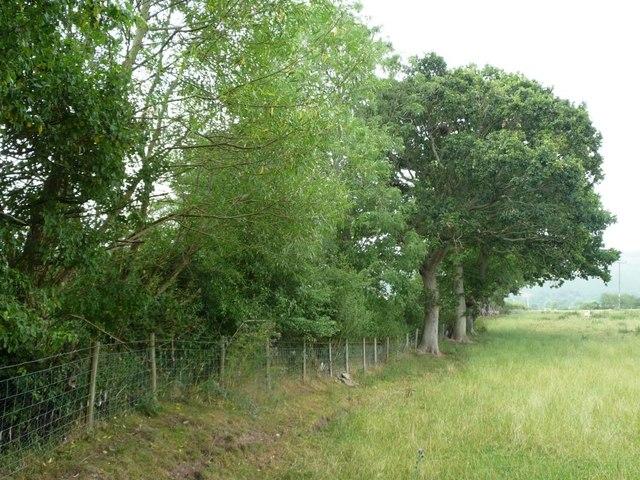 Trees along the field boundary