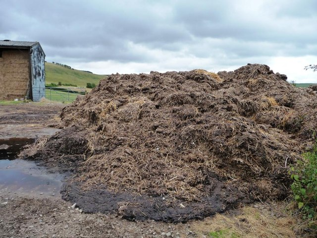 Muck heap at Pen y Wern farm