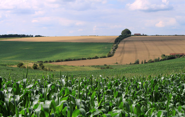 2011 : Field of maize and a dry valley east of Heytesbury
