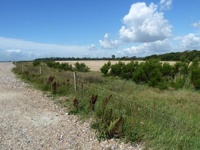 Along the coast from Atherington to Elmer (5)