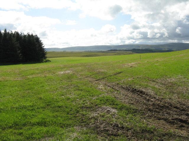 Grass crop at Mount Lothian