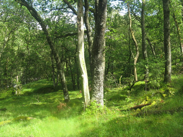 Oak woodland in the Pass of Leny