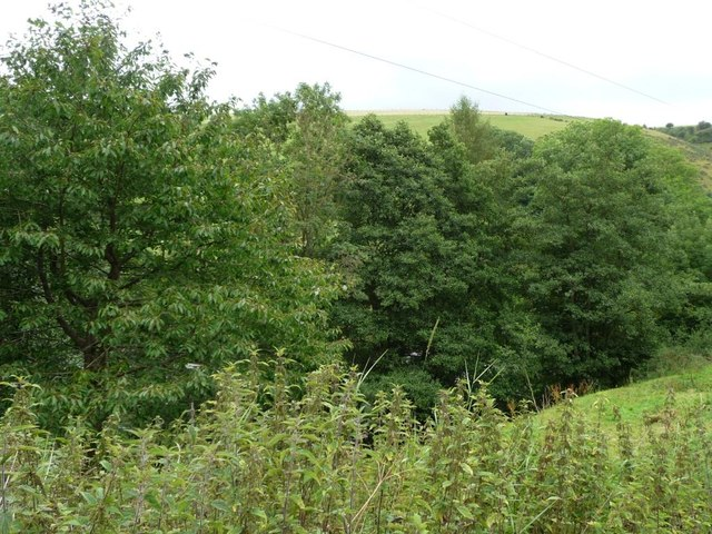 Valley bottom woodland