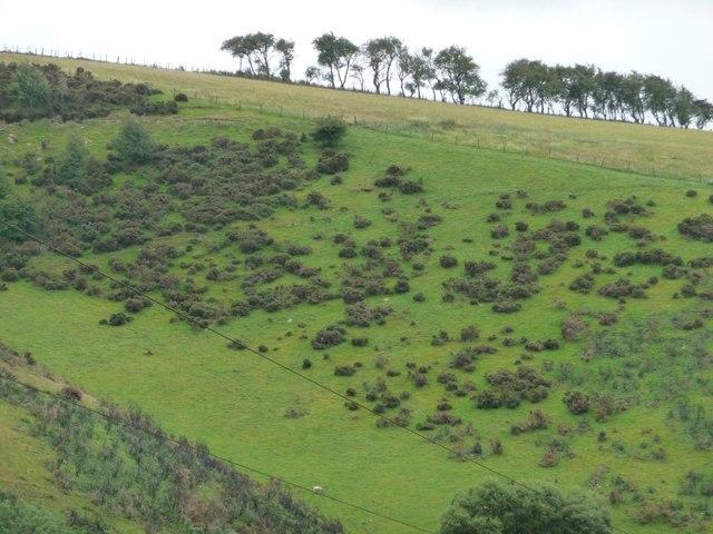 Trees on Hodre Hill