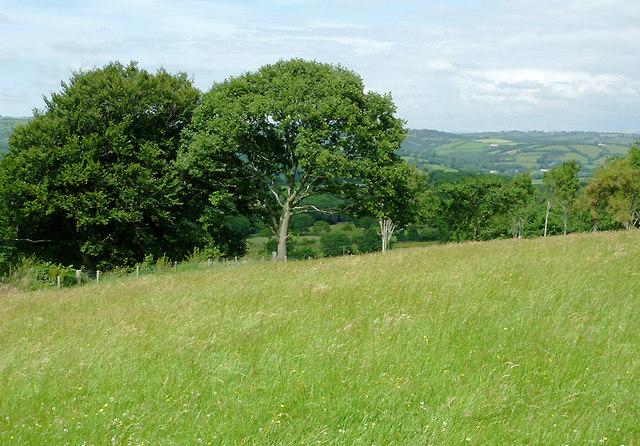 Grass field east of  Llwyn-y-Groes, Ceredigion