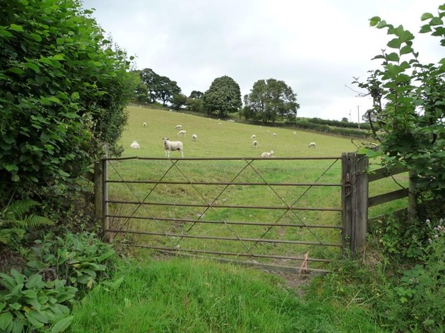 Gated sheep pasture, near The Quern