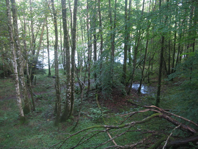 Damp woodland in the Pass of Leny