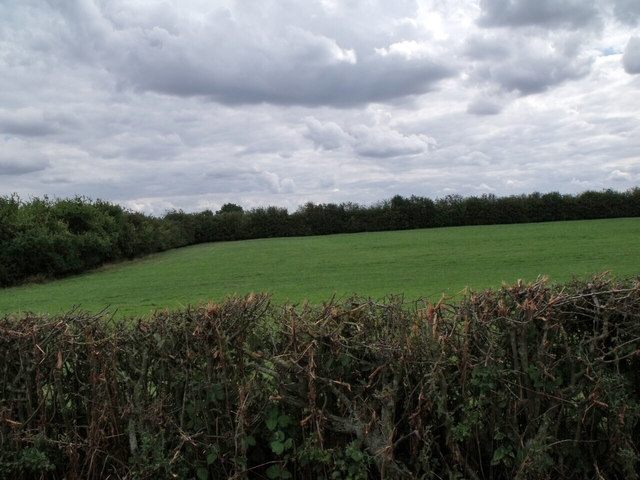 Woodland and Field near Anwick