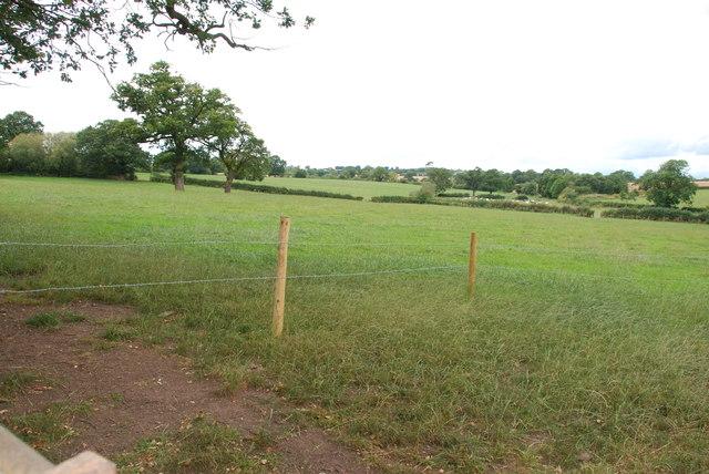 Across Pasture to Herd of Cows