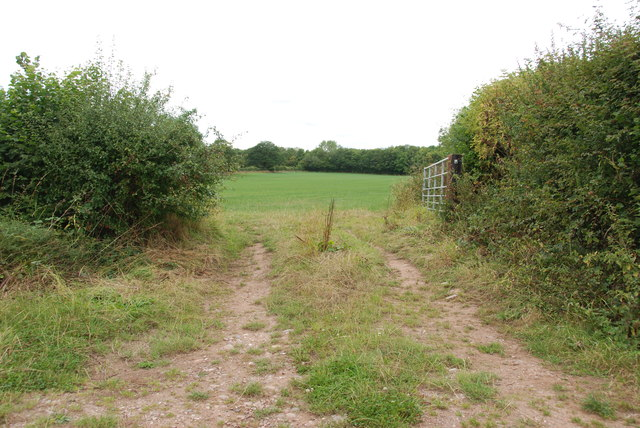 Open Gate to Grass Field