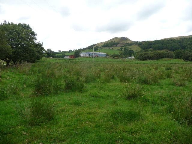 Dolebolion near Pontrhydfendigaid