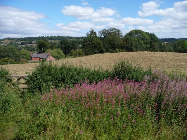 Mown field east of the railway line