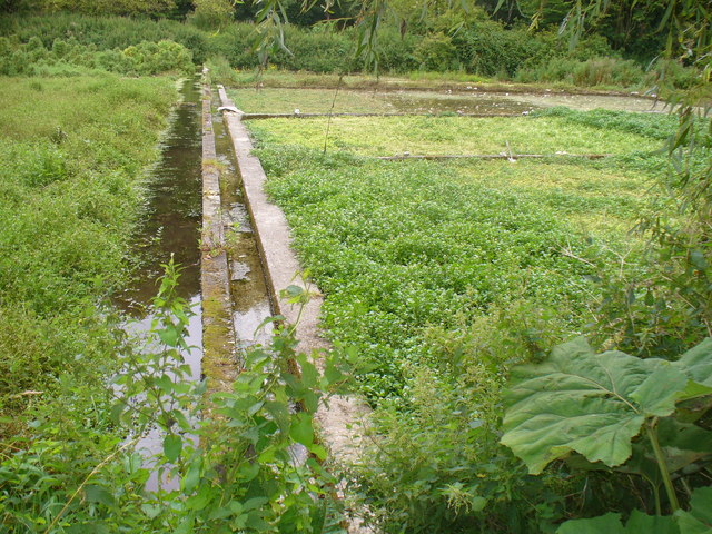 Watercress Beds, Alresford