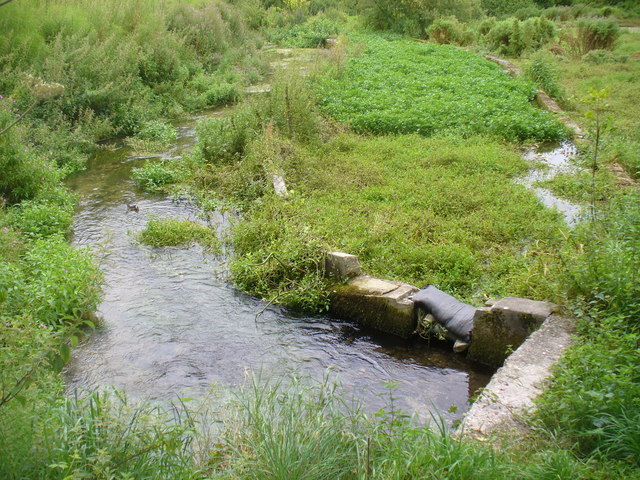 Watercress Beds by Alre Mill