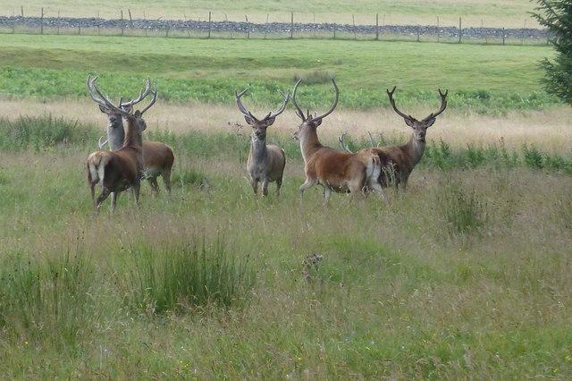 A group of startled stags near Allt a' Mhuilinn burn